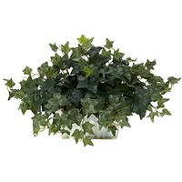 14 inch Ivy in White Wash Planter