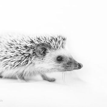 Hedgehog - 6x9 inches Fine Art Photograph - Original Signed Photo Print - a small African hedgehog - nursery wall art - from woodland