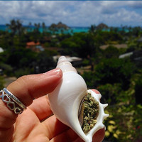 Seashell smoking Pipe - Natural and Handmade