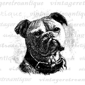 Printable Image Bulldog Graphic Dog Download Digital Vintage Clip Art Jpg Png Eps  HQ 300dpi No.648