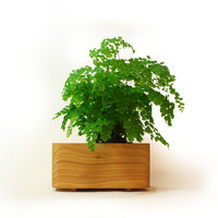 Cedar Planter Medium 150mmx210mm by Tanti Design