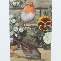 Robin Picture, Christmas decor, Christmas decoration, Picture of Robin