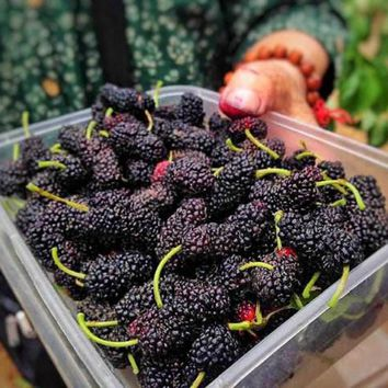 100 nutritious Pre-Stratified Jumbo Thornless Blackberry Seeds juicy sweet healthy fruit DIY Home Garden Fruit Seeds