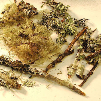 dry lichen specimens by paperanji on Etsy