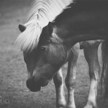 Horse Photography, Black and White, Equine Art, Fine Art Photo, Farm, Rustic, Animal, Archival Print, Nature, Horses Wall Art - I'm Here