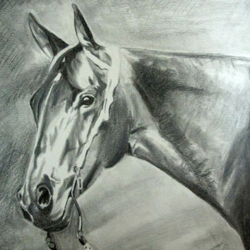 Horse Drawing  - Pencil Portrait - Pet Drawing - Custom Portrait - Pencil Sketch Portrait - Horse Sketch - Animal Portrait from Photo