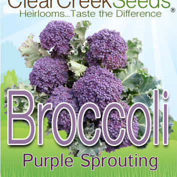 Seeds - Heirloom Garden Vegetable Seeds - Broccoli- Purple Sprouting, Non-GMO