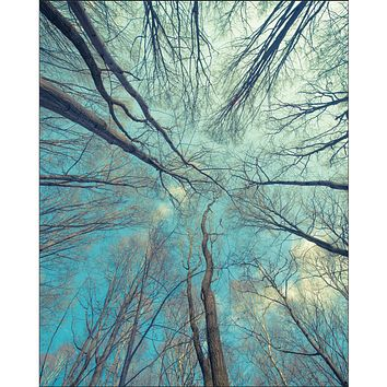 Trees Looking Up Blue Sky Wall Poster Yoga Meditation Wall Poster Giclee Art Prints