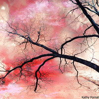 Nature Photography, Surreal Fantasy Nature, Gothic Trees Haunting Nature Trees and Sky, Surreal Fantasy Abstract Nature Photography 8x12