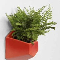 Magical Thinking Geo Planter-