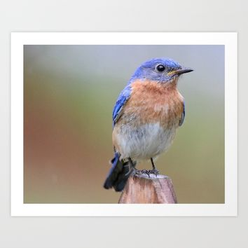 Bluebird Art Print by Veronica Ventress
