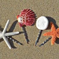Set of 4 Cute Mermaid Bobby Pins Hair Accessories. - Starfish, Sand Dollar and Seashell