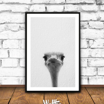 Ostrich Print, Woodlands Decor, Wilderness Wall Art, Nursery Black and White, Animal Print, Printable Art, Ostrich Download, Instant