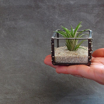 Mini Air Plant Holder, Small Glass Cube Planter, Desk Accessory