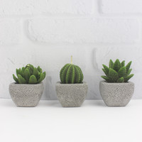Mini Cactus Candle Set