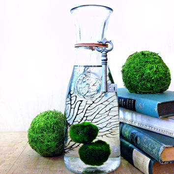Large Marimo Moss Ball Terrarium / Aquarium Moss Bottle Biosphere Kit