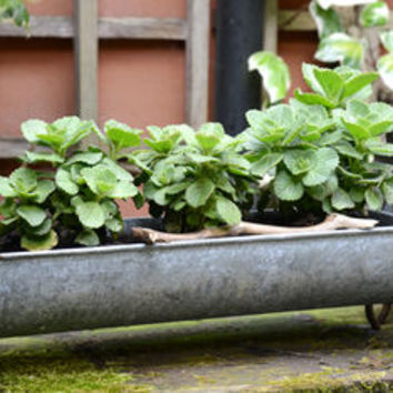 'Snuffle', Vintage Style Trough