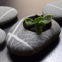 Home decor  hand made planter  engraved beach stone by Mihulli