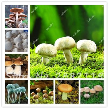100 Pcs Mushroom Seeds Edible Healthy Vegetable So Delicious Mixed Mushroom Seeds For Happy Farm Funny Succlent Plants