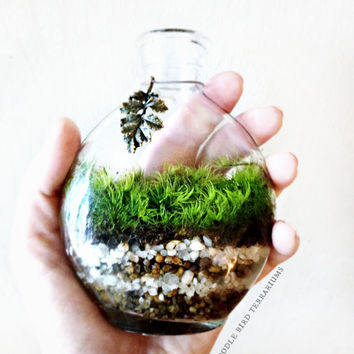 Decanter Terrarium in Glass Bottle Urban Garden