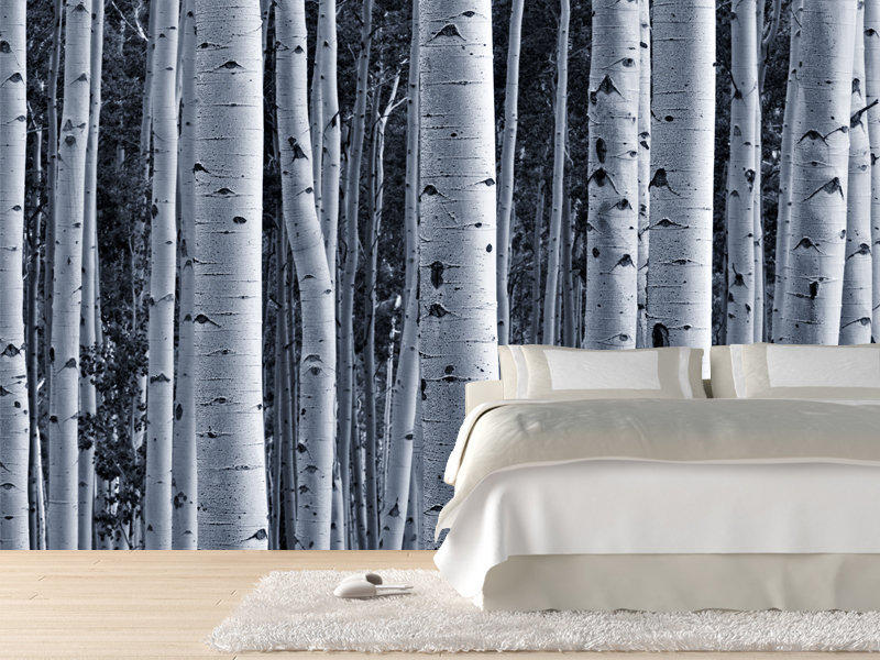 Aspen birch forest wall mural wall from wall for Birch trees mural