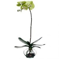 "22"" Phalaenopsis Orchid Silk Flower Arrangement -Green"
