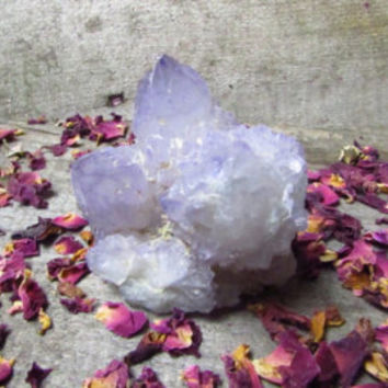 Amethyst cactus spirit quartz - druzy - picses present raw crystal alter stone- wiccan - witch - hippy - goth bedroom - cluster - gemstone