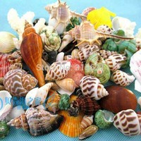 A Bounty of Fifty Shells For Your Aquarium Tank