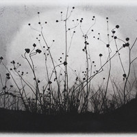Moonrise Charmed Meadow solarplate etching on by 88editions