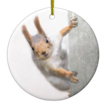 Curious squirrel ceramic ornament