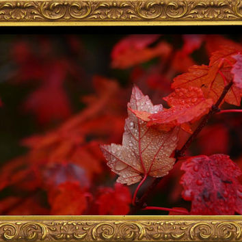 Autumn Photography,fall leaves,seasons,home decor,claret,crimson leaves,brilliant autumn foliage,jewel tones,stunning garnet,ruby red,merlot