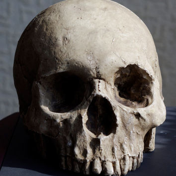 HUMAN SKULL REPLICA (sale now on) full size realistic replica made from plaster of Paris and painted for an aged, weathered effect
