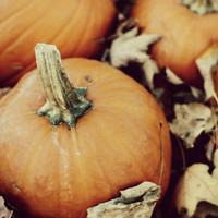 Picked Pumpkin 5x7, 8x10, or 8.5x11 - Rustic Home - Autumn Decor - Harvest - Nature Photography - Fall - Food