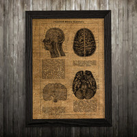 Medical poster Brain print Anatomy art Biology print BLP843