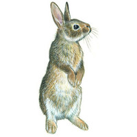 RABBIT-ILLUSTRATION (image preview: FOT32958) | fotoLibra