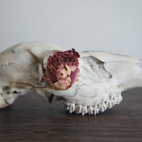 Print 04 They're Pretty Too // Deer Skull Botanica Photograph Poster // Glossy Print 18 x 24 in. Matte