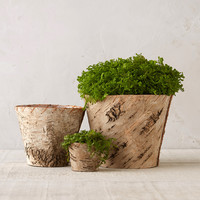 Birch Tapered Flower Pot