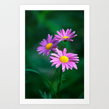 Three purple daisies. Art Print by veronika2v