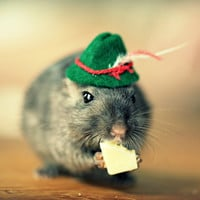 Note Card Gerbil in a Green Hat Folded Photo Card With Envelope (1)