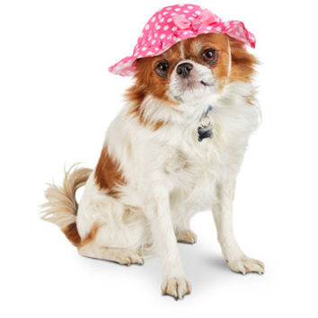 Smoochie Pooch Pink Bucket Dot Dog Hat