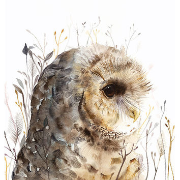 watercolor painting- Owl art- Spotted Owl -large print after original watercolor