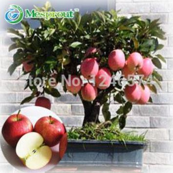 100 pcs Bonsai Apple Tree Seeds rare fruit bonsai tree-- red delicious apple seeds garden for flower pot planters