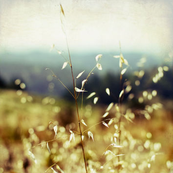 "Autumn Nature Photography - golden sunlit grasses ochre gold olive forest green dreamy landscape 8x8 16x16 print ""Sunlit Grasses"""