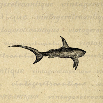 Swimming Shark Printable Digital Image Download Graphic Antique Clip Art for Transfers Printing etc HQ 300dpi No.578