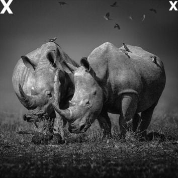 Two white Rhinoceros in the field with birds flying - Airbrush Stencils