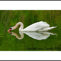 Photography, Swan, Landscape, pond, fine art