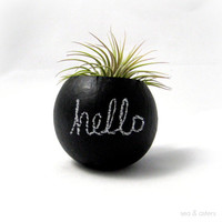 Mini Air Plant Container Pod - Hello Chalkboard // Black // Home Decor