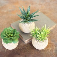 Succulents With Roped Terra Cotta Pots (Set of 3)