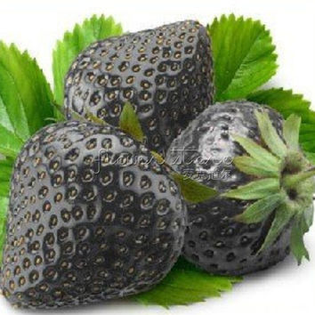 100 Healthy Black Strawberry Seeds ruit Fresh Exotic Seeds Good Taste Fruits Easy Care