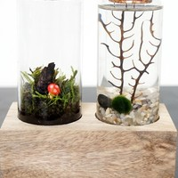 Moss + Twigg Land & Sea Terrarium Set - White